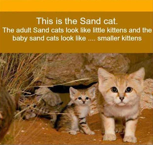 Lietderīga informācija par dzīvniekiem un putniem, online web kameras - Page 2 83954449
