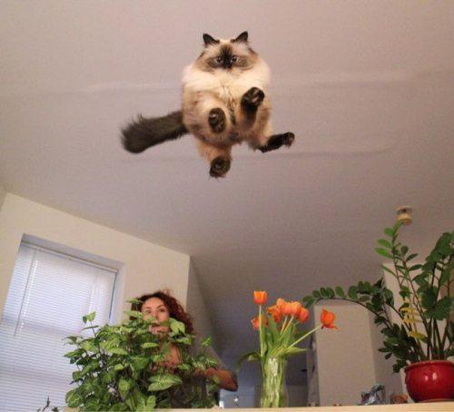 Lidojošie kaķi - Page 4 83698711