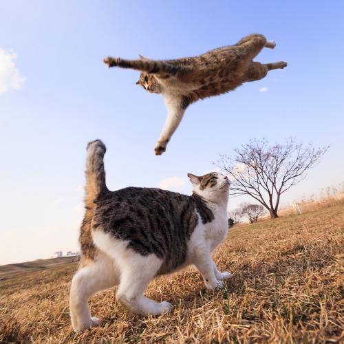 Lidojošie kaķi - Page 4 84357708