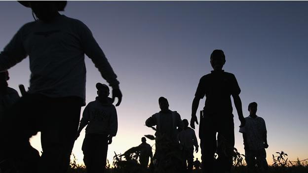 INMIGRANTES Migrantes-en-pastizal