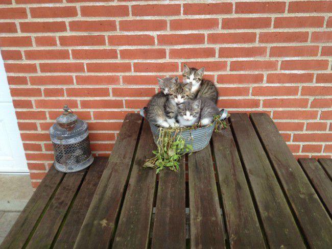 коты и цветы 1_13