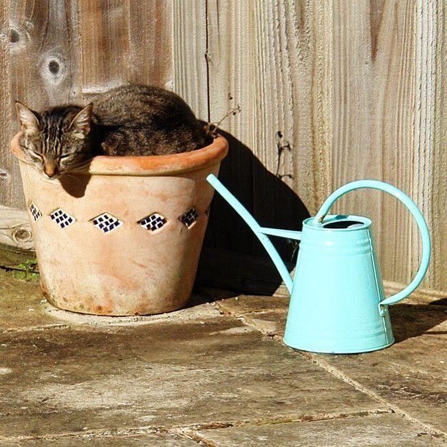 коты и цветы 1_14