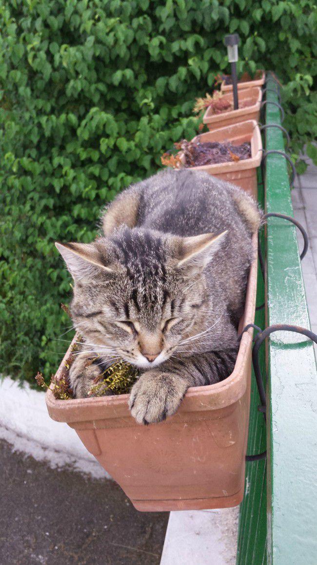 коты и цветы 2_12