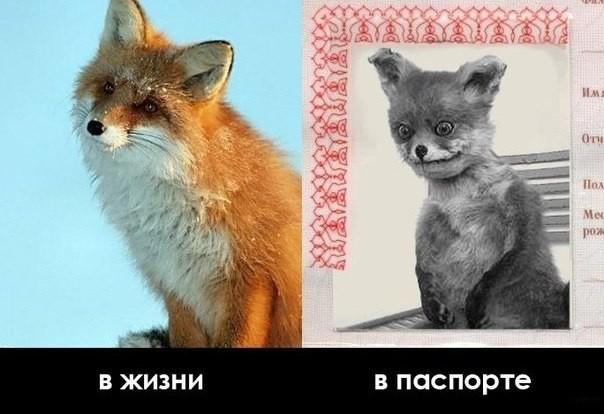 ВЕСЕЛЫЕ КАРТИНКИ Prodolzhenie-vy-najdete-na-nashem-sajte-yaustalcom-0