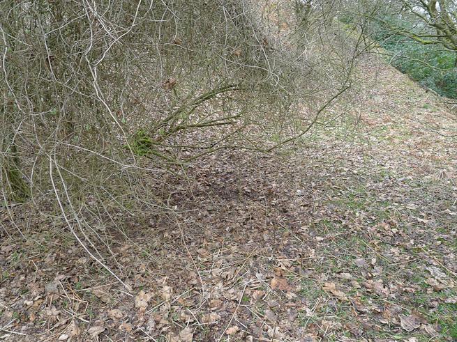 Disturbance to leaves under a bush