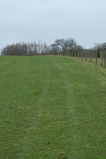 quad bike tracks in grass = colour change