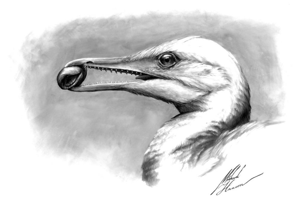 Des fossiles révèlent comment les premiers becs d'oiseaux se sont développés ! By Gurumed.org Ichthyornis-dispar1-18_thumb