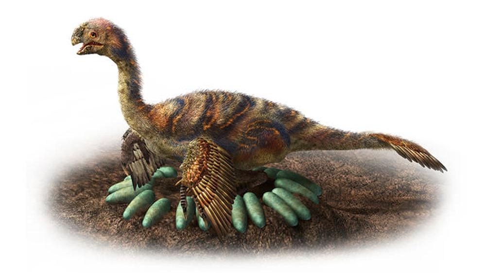 Comment les dinosaures ne transformaient pas en omelette les œufs qu'ils couvaient ? By Gurumed.org Oviraptorosaur-oeufs1_thumb