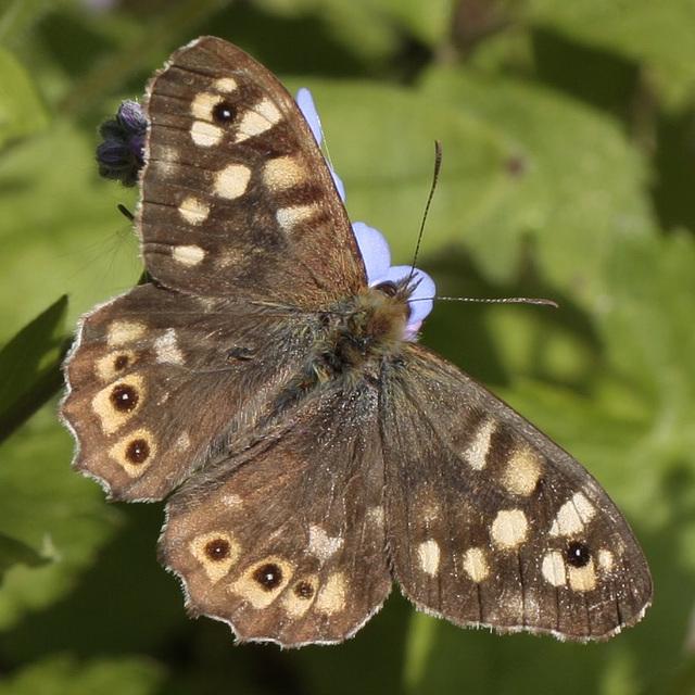 fil(et) à papillons - Page 15 7979521.4af740c4.640