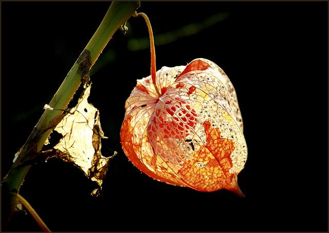 l'automne arrive... - Page 5 35594401.80d2ea20.640