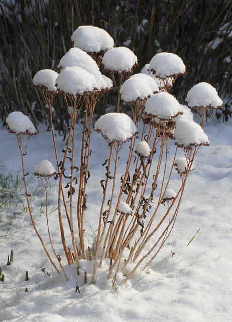 Ambiance et couleurs hivernales, décos naturelles 12147516.79d7f48b.640