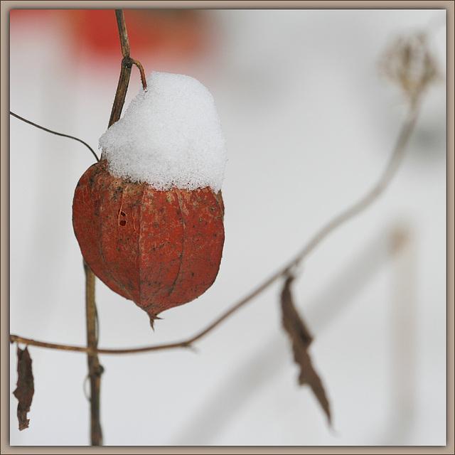 Ambiance et couleurs hivernales, décos naturelles 14149491.cd12f940.640
