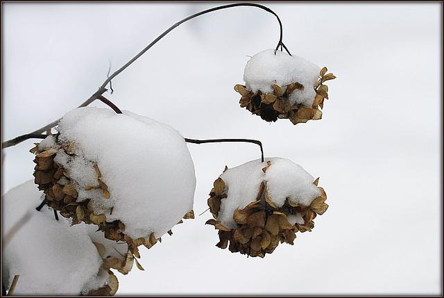 Ambiance et couleurs hivernales, décos naturelles 14149494.cef95f65.640