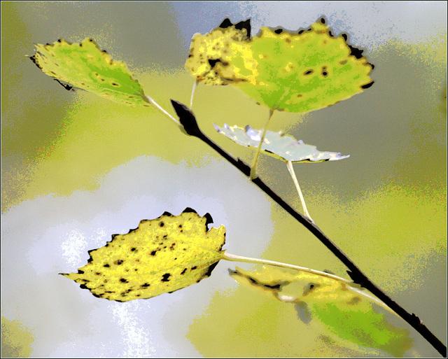 l'automne arrive... - Page 5 35794981.13ba1451.640