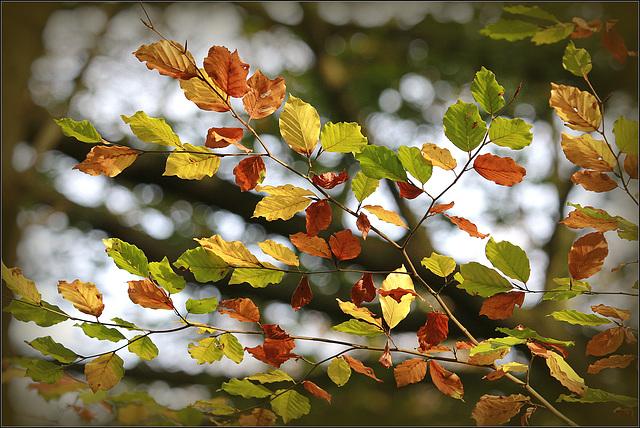 l'automne arrive... - Page 5 35816473.3f4d3825.640