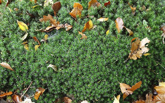 Concours : Les  plantes font tapis - Page 2 40060102.1ea0d7f8.640