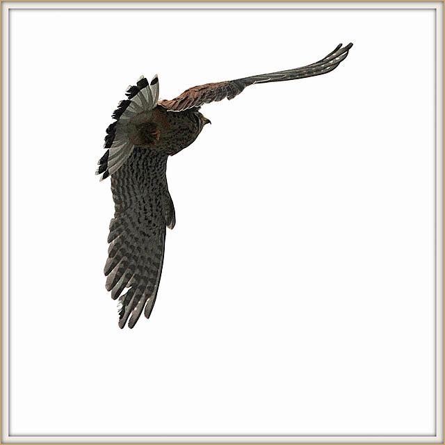 les visiteurs à plumes sauvages  2 - Page 11 38101890.cfa5fc6c.640