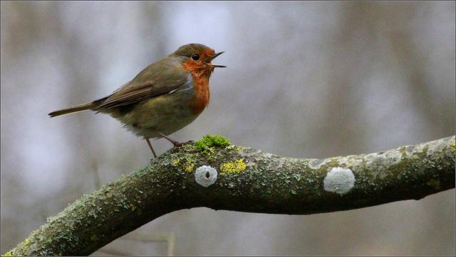 comptage des oiseaux au jardin 46111926.f90712f2.640