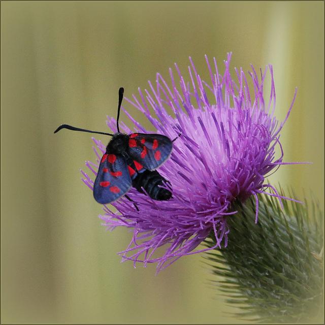 fil(et) à papillons - Page 7 39172710.d374aed9.640