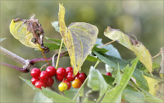 Nomenclature internationale - rédaction des noms de plantes 40063944.cc13e81e.640