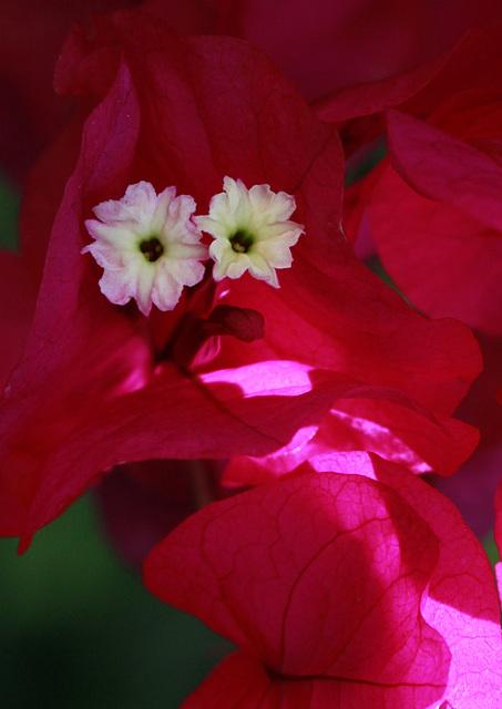 """Concours """"accessoires jardinistiques"""" - les votes - Page 2 44964088.36f3d82e.640"""
