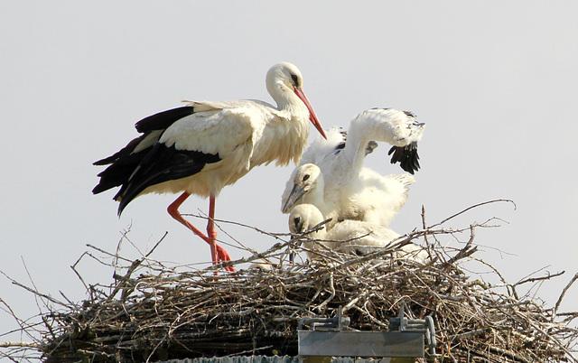 les visiteurs à plumes sauvages - 3 - Page 3 47304410.99f90de7.640