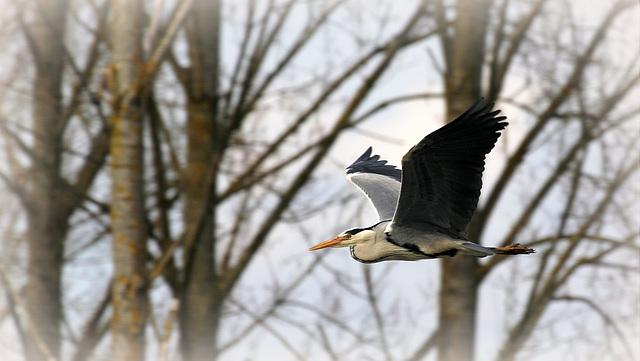 les visiteurs à plumes sauvages  2 - Page 2 41594916.c8de8de2.640