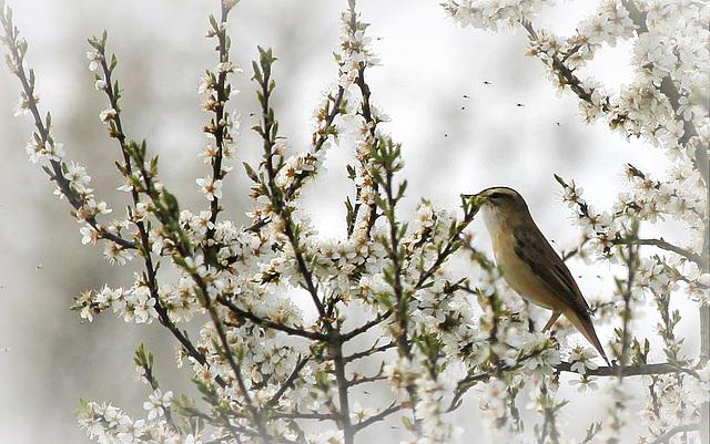 les visiteurs à plumes sauvages  2 - Page 2 41595106.f8d40d85.640