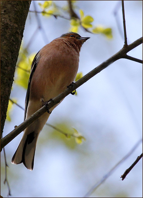 les visiteurs à plumes sauvages  2 - Page 2 41625548.46412c29.640