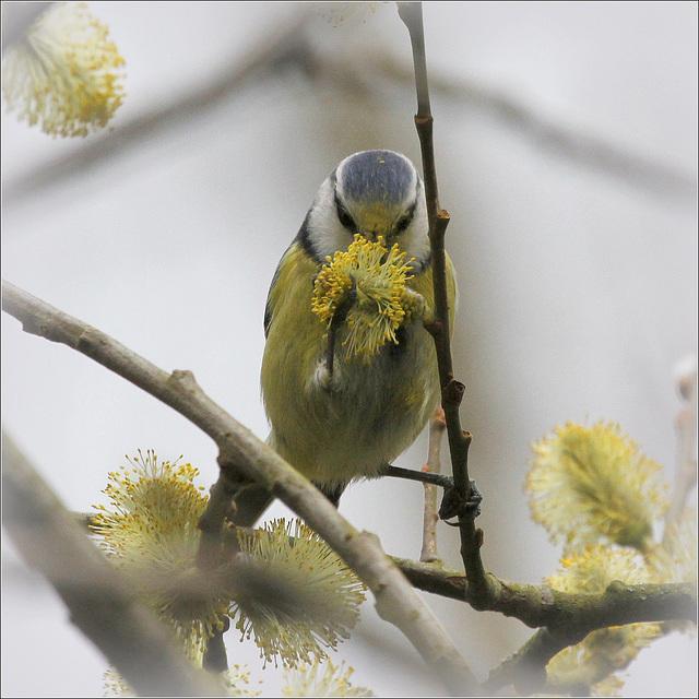 les visiteurs à plumes sauvages  2 41435586.5597d87b.640