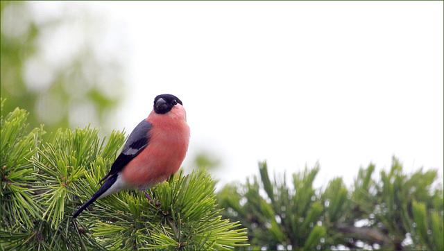 les visiteurs à plumes sauvages  2 - Page 11 44797762.f2bfe84f.640