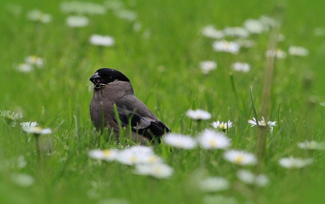 les visiteurs à plumes sauvages  2 - Page 11 44797882.545e357f.640