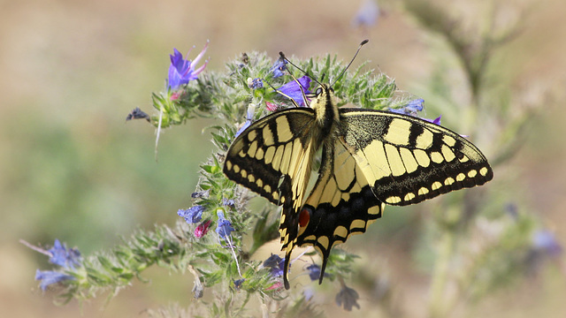 fil(et) à papillons - Page 14 45288072.db1912fb.640