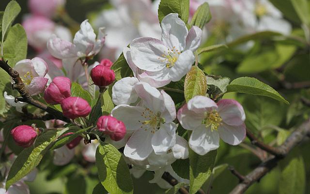 joli mois de mai, le jardin fait à son gré - Page 2 41788464.37c608bb.640