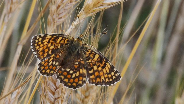 fil(et) à papillons - Page 7 39279352.04220af6.640