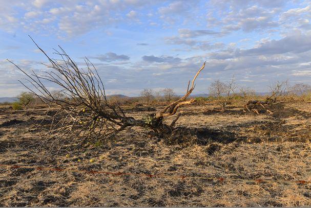 Sequía: Etiopía,  Malawi, Nicaragua Sequia1