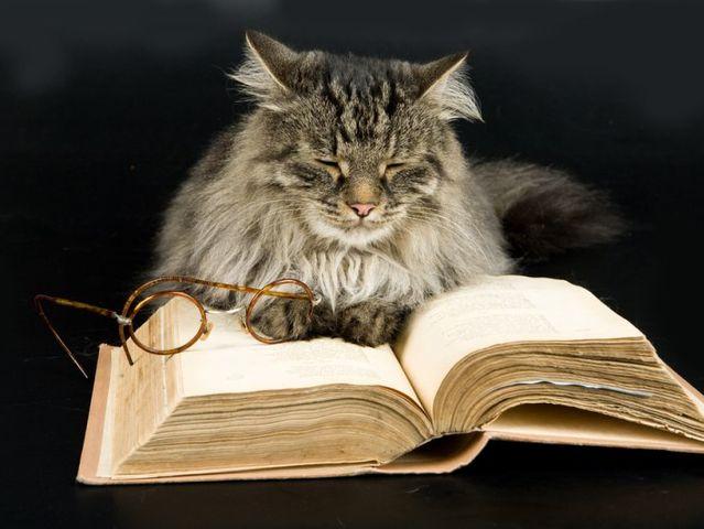 Тест: Помните ли вы названия книг из школьной программы?  29b73d83-c263-416d-a2b9-e39f4bb59416