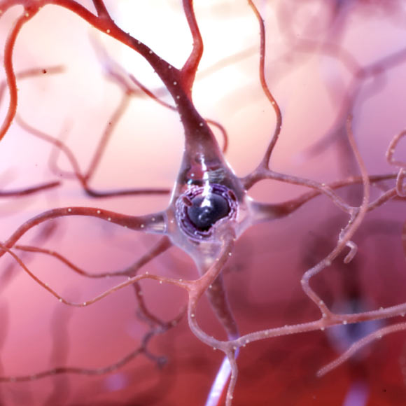 Protein from Liver May Cause Alzheimer's Disease, Groundbreaking Study Says Image_6225-Neurodegeneration-Compound