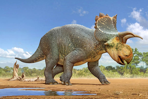 Paleo Discoveries of 2018 - Page 4 Image_6729-Crittendenceratops-krzyzanowskii
