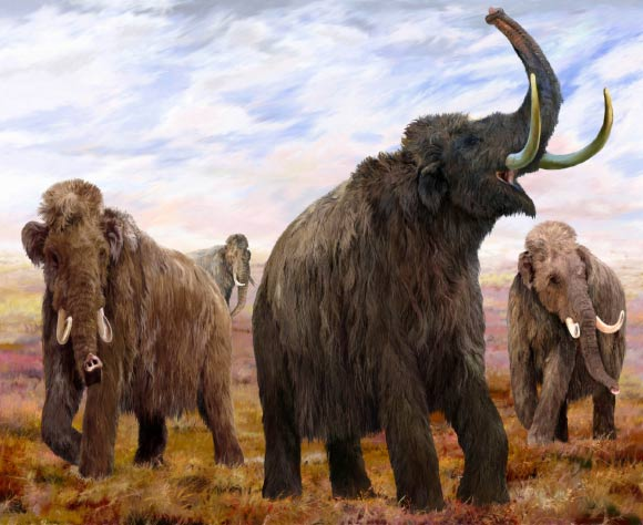 DNA-Based 'Clock' Predicts Maximum Lifespan in Living and Extinct Vertebrates Image_7910_1-Woolly-Mammoths