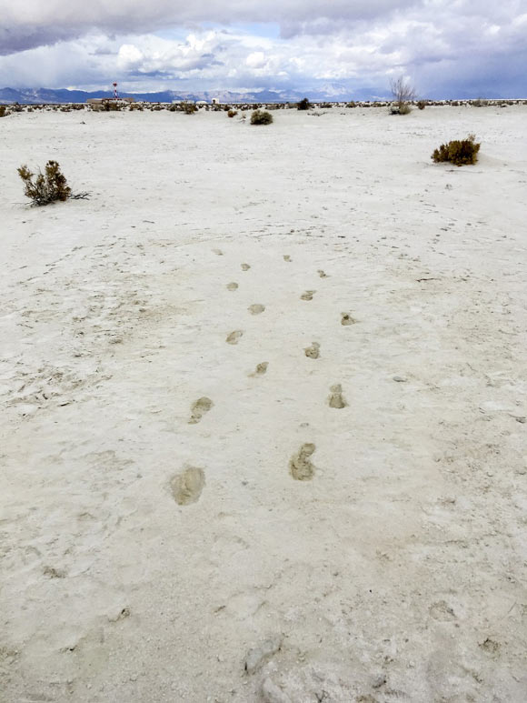 12,000-Year-Old Human Footprints Found in New Mexico Image_8953-White-Sands-Footprints