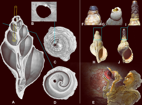 Sound of an 18,000-Year-Old Seashell Horn Image_9349_3-Seashell-Horn