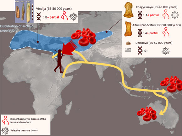 Researchers Decipher Blood Groups of Neanderthals and Denisovans Image_9912-Neanderthal-Denisovan-Blood-Groups