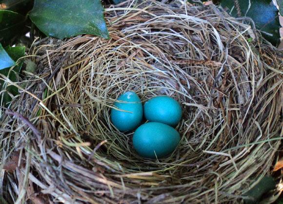Researchers Find Universal Formula for Egg Shape Image_10019-Egg-Formula