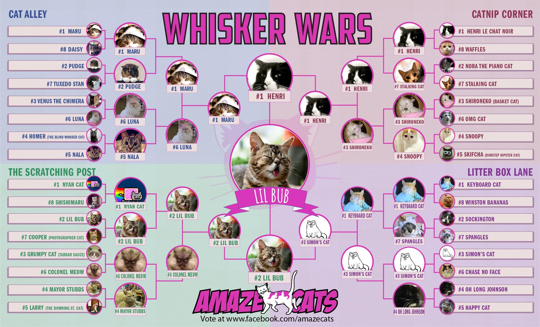 CATS!!!!!!!!!!!! FinalBracket-01