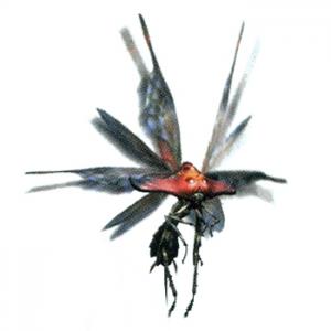 Invertebrate?  More Like Inverte-great! 300px-Bnahabra