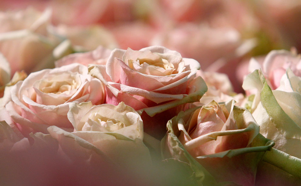 Valentine là gì? S_v03_RTR2XS2P
