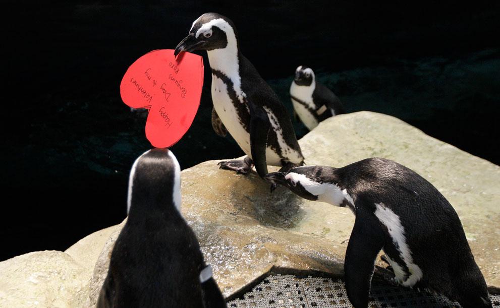 Valentine là gì? S_v24_13129501