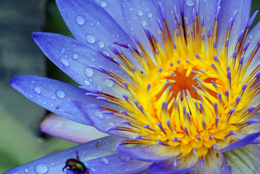 ~Floriiii~ Flowers_1