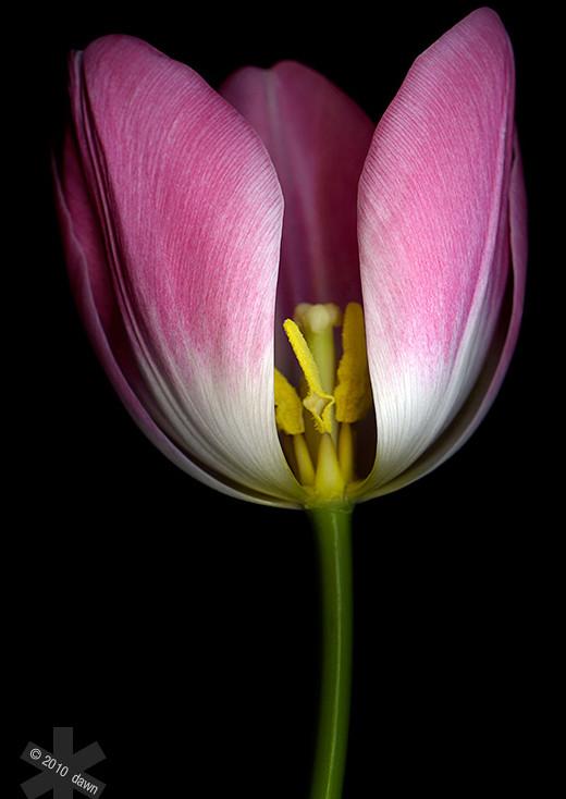 ~Floriiii~ Flowers_12